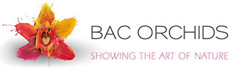 Bac Orchids logo